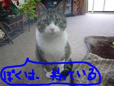 snap_minamimamami_201122122425.jpg