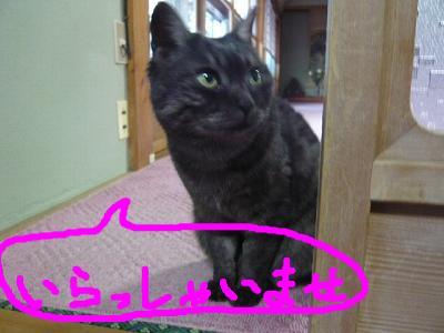 snap_minamimamami_20112551142.jpg