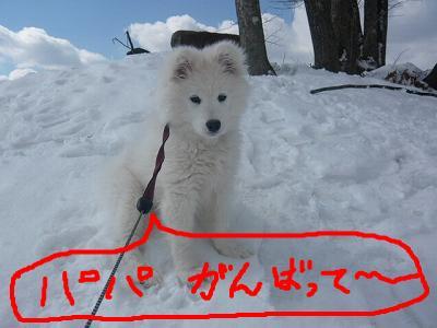 snap_minamimamami_201132234547.jpg