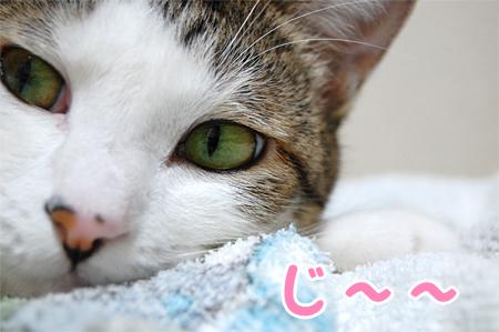 100813_ご機嫌斜め01