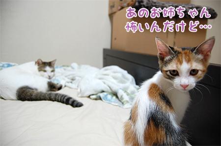 100813_ご機嫌斜め04