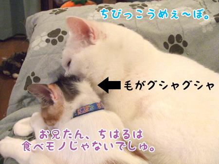 100824_ちはるとメメタ04
