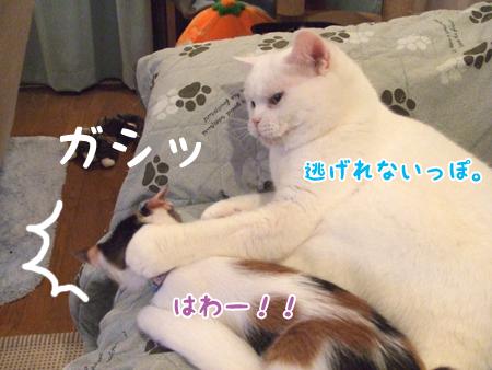 100824_ちはるとメメタ05