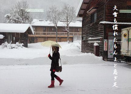 2月D大雪も