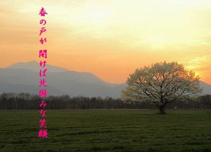 こぶしの花(3月)春の戸
