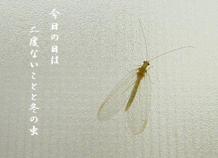 ふゆの虫(ウスバカゲロウ)今日の日は