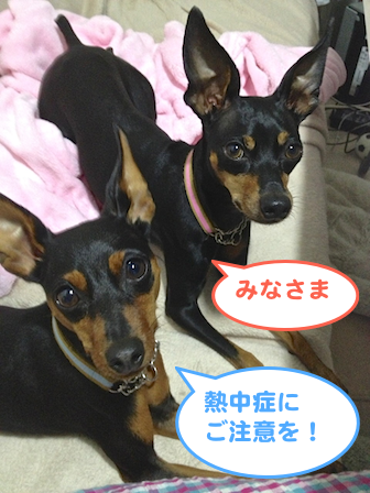 20130711-3.png