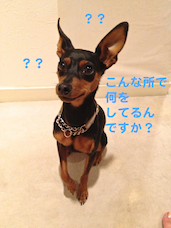 20130717-1.png