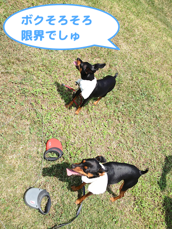 20130803-3.png