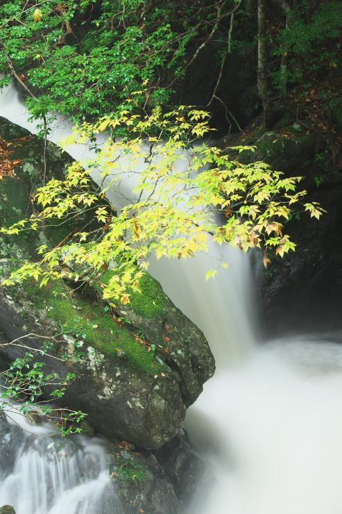 雨の紅葉木谷峡6