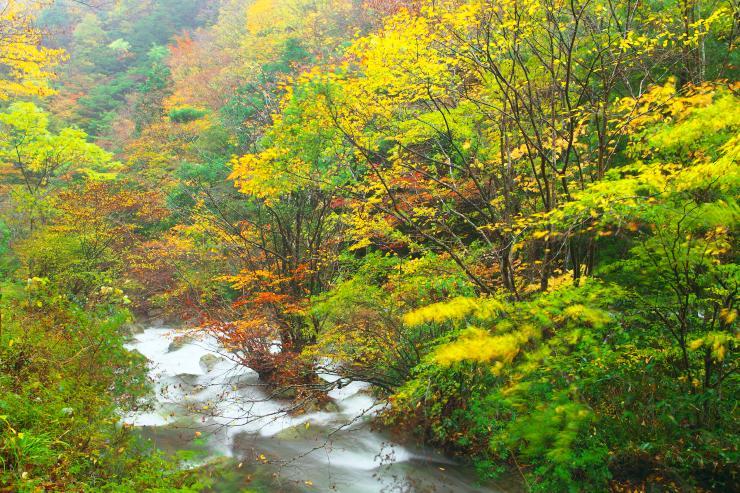 雨の紅葉木谷峡