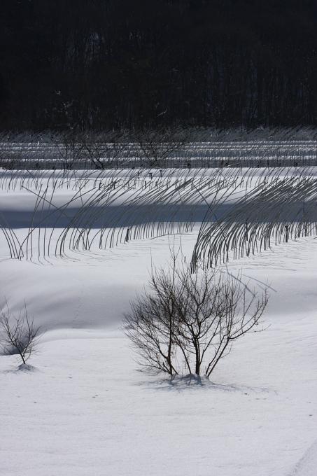 吉和の雪景色