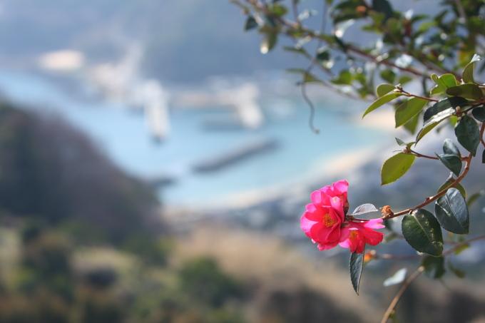 島に咲く花たち