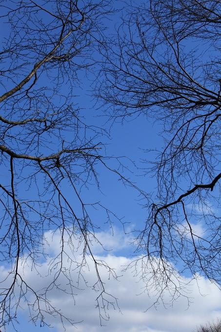 枝を伸ばして