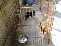 10.8.2 愛媛動物愛護センター2 譲渡会に出される犬1