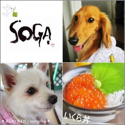 ~SOGA~