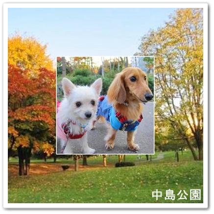中島公園レンラン