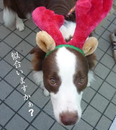 いぬのきもちクリスマス4