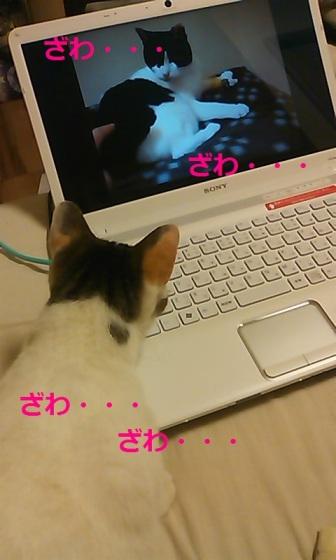 fu_zawazawa