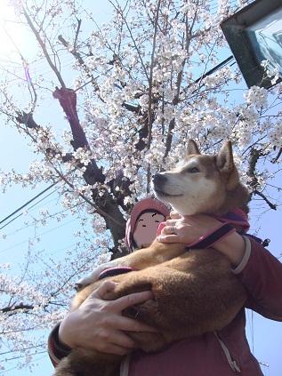 お花見20124