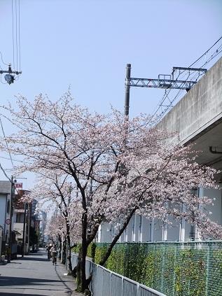 お花見20121