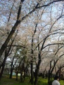 ?桜?のブログ-sakura