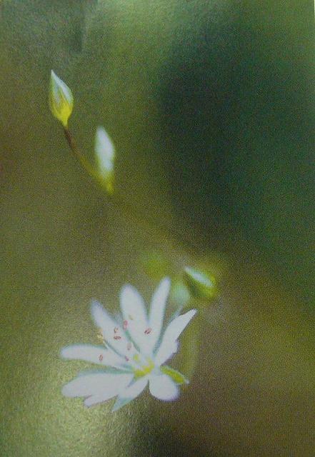 白い花 山本 25.10.16