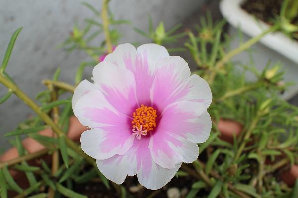 お花アップ25.9.22