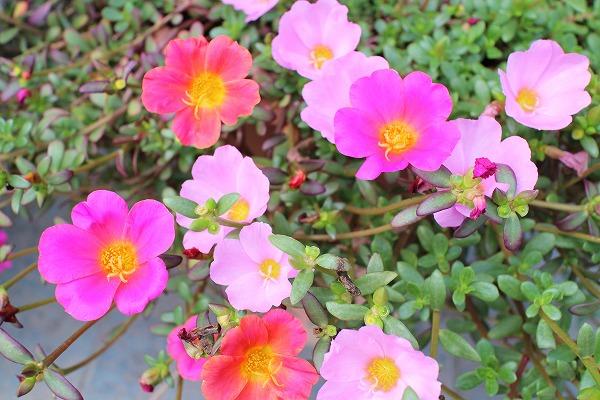お花25.9.22