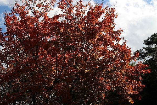 五色台道の横の紅葉