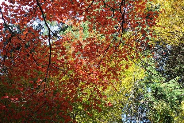 根香寺3色の紅葉