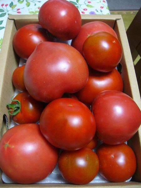 トマト一杯