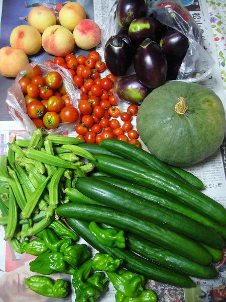 またまた夏野菜25.7.24