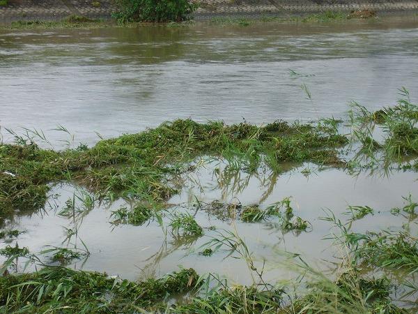 高瀬川台風17号の雨で