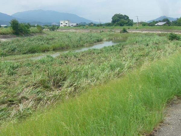 高瀬川普段の水量