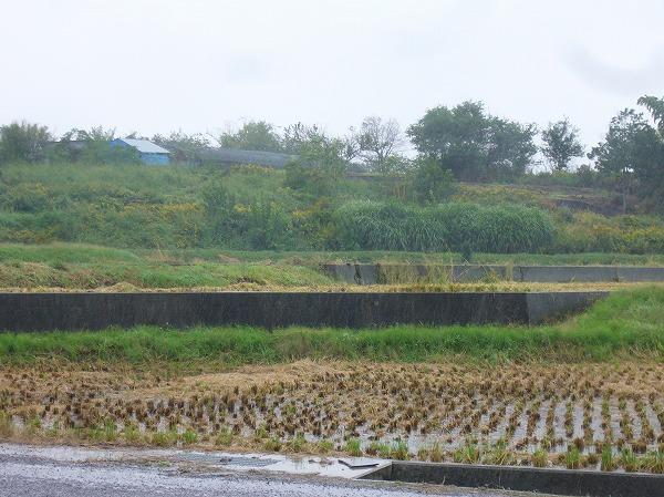 葬儀場横の畑も田んぼも雨です