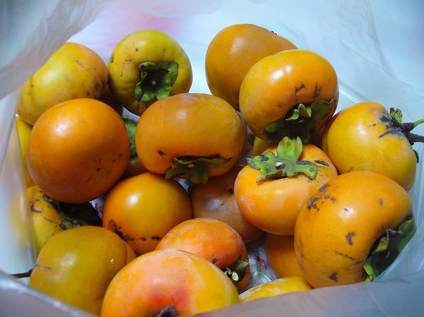 ちぎった柿の実