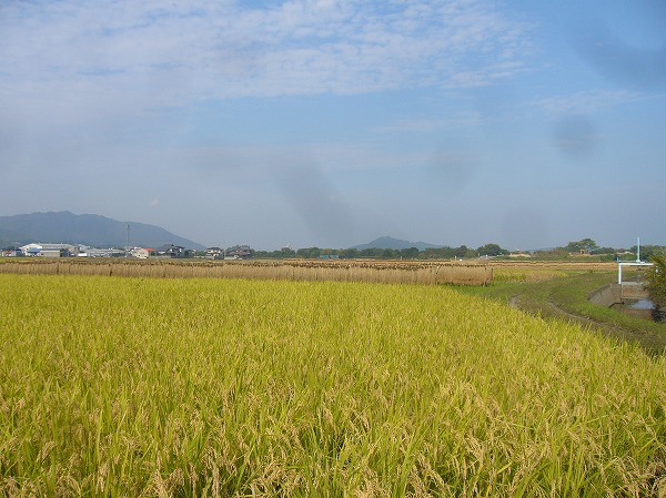 カジヤノウラの田んぼ横の風景