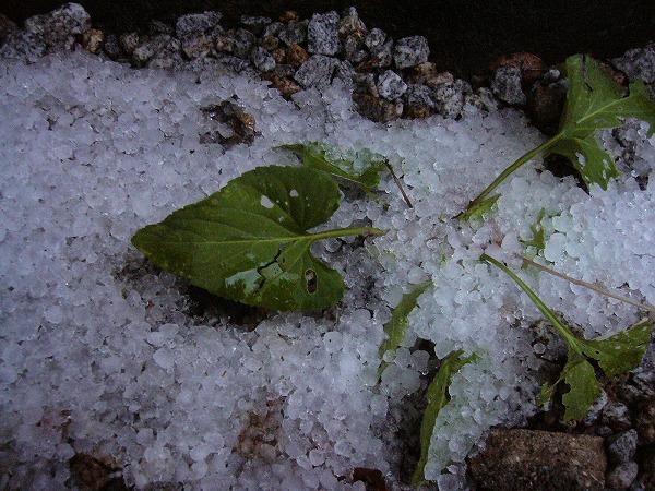 初雪 25.11.19