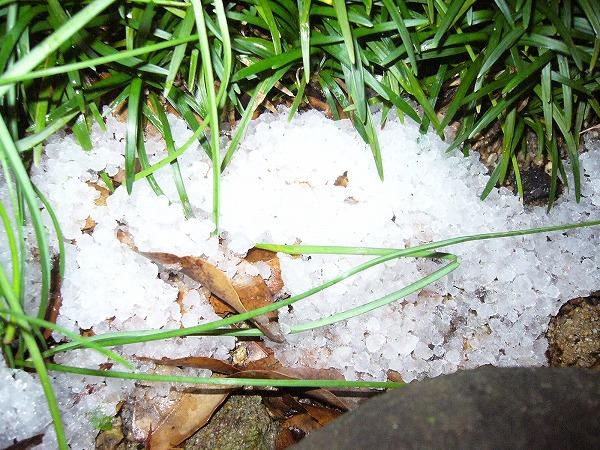 初雪2 25.11.19