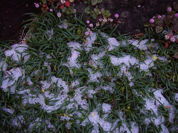 初雪3 25.11.19