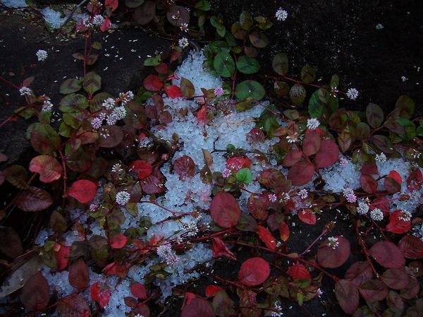 初雪4 25.11.19