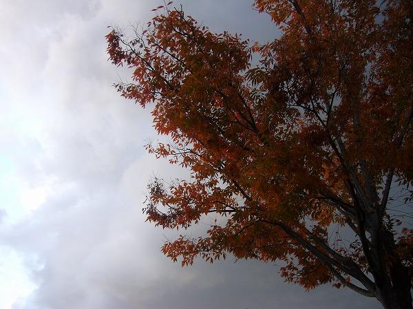 雪雲と紅葉