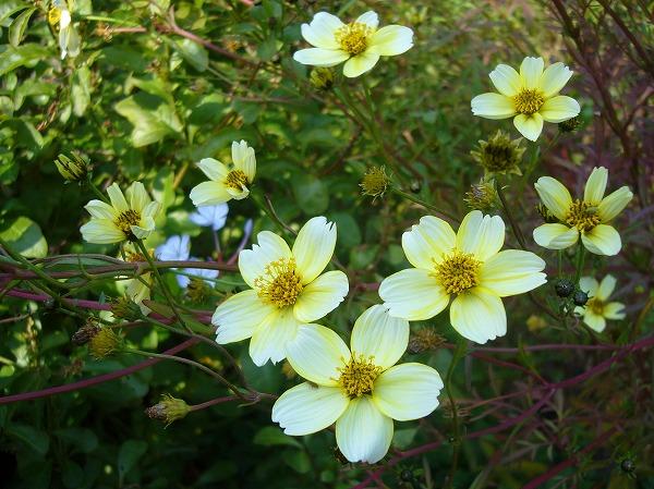 ブイブイガーデンの可愛い花