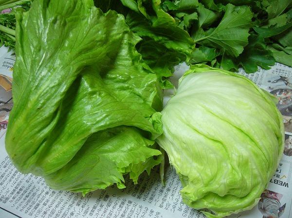 野菜レタス25.12.5