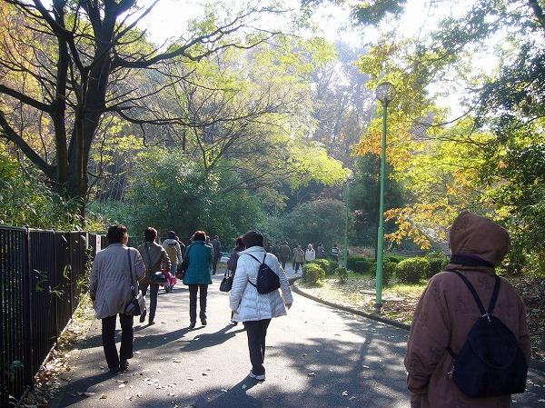紅葉の暖かい日 歩いて 25.12.5