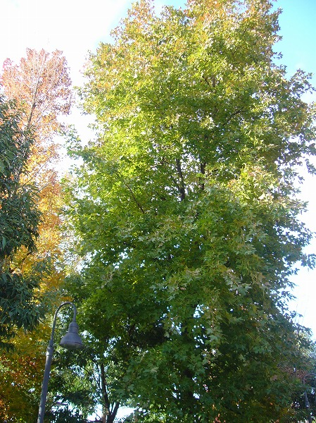 義父が入院した頃の樹25.12.23