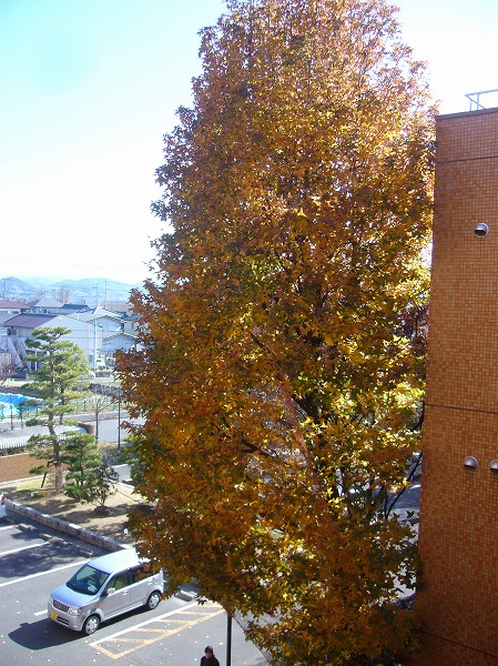 義父の病室から見える樹26.1.5