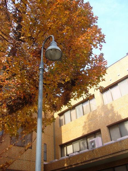 病院の樹と義父の部屋(3階)26.1.11