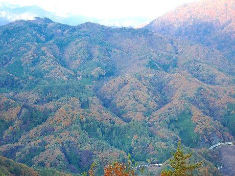 紅葉 2011.11.13 011